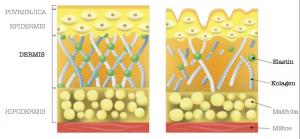 kolagen v koži